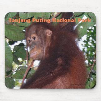Baby orangutan:Tanjung Puting National Park Mouse Pad