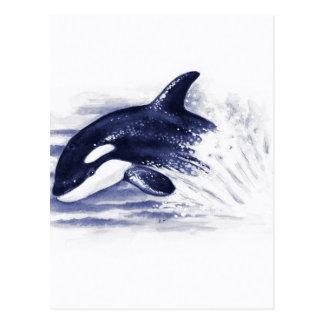 Baby Orca Jump Postcard