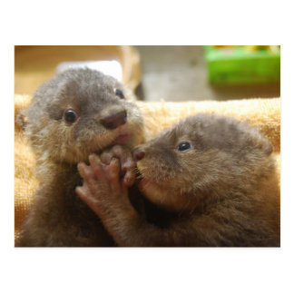 Baby otter pups postcard