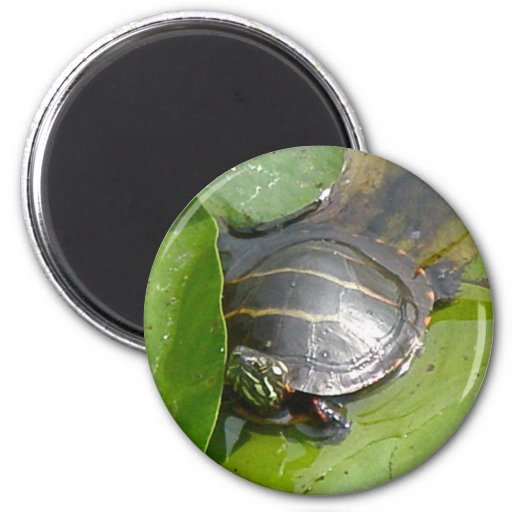 Baby Painted Turtle on Lilypad Items Refrigerator Magnet