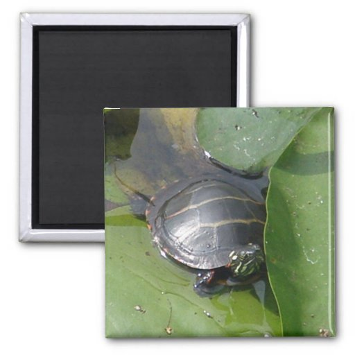 Baby Painted Turtle on Lilypad Items Refrigerator Magnets