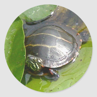 Baby Painted Turtle on Lilypad Items Round Sticker