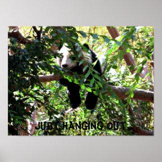 Baby Panda Humorous Poster