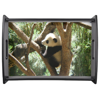 Baby Panda in Tree Serving Tray