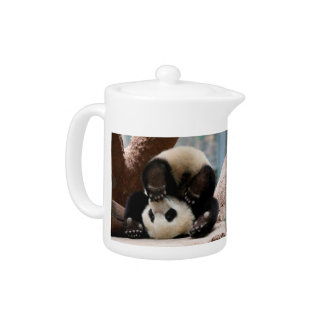 Baby pandas playing - baby panda  cute panda