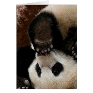 Baby pandas playing - baby panda  cute panda card