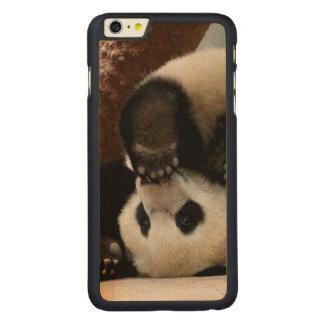 Baby pandas playing - baby panda  cute panda carved maple iPhone 6 plus case