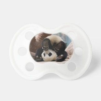 Baby pandas playing - baby panda  cute panda dummy