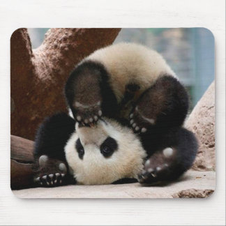 Baby pandas playing - baby panda  cute panda mouse pad