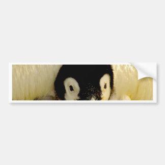Baby Penguin Bumper Stickers
