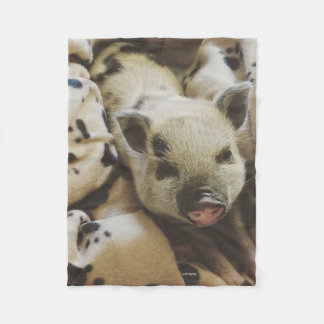 Baby Piglet In A Blanket