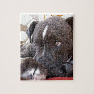 Baby Pitbull Puppies Jigsaw Puzzle