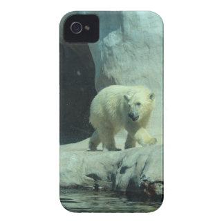 Baby Polar Bear iPhone 4 Case-Mate Case