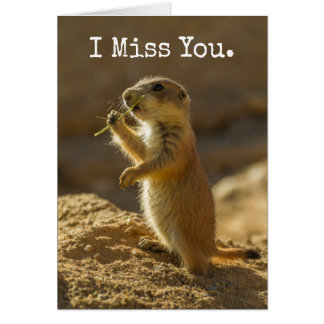 Baby prairie dog eating, Arizona Card