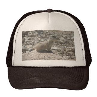 Baby Prairie Dog Hat