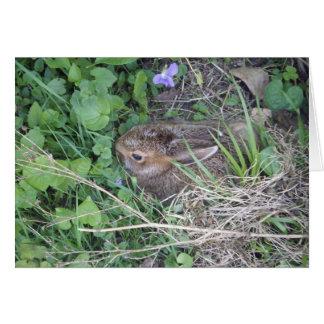 Baby Rabbit Blank Card
