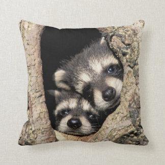 Baby raccoons in tree cavity Procyon Throw Cushions