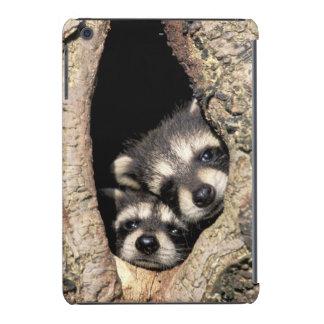 Baby raccoons in tree cavity Procyon iPad Mini Retina Cover