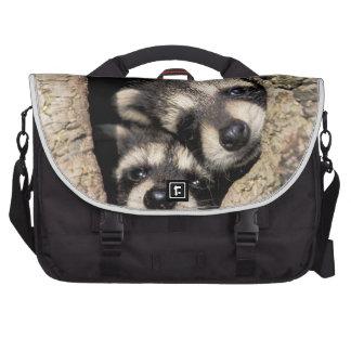 Baby raccoons in tree cavity Procyon Laptop Shoulder Bag