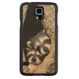 Baby raccoons in tree cavity Procyon Maple Galaxy S5 Case