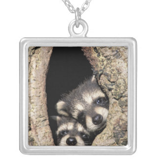 Baby raccoons in tree cavity Procyon Square Pendant Necklace