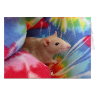 Baby Rat Card