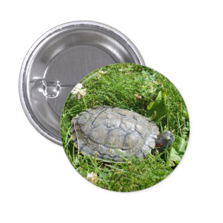 Baby Red Eared Slider Turtle 1 Inch Round Button