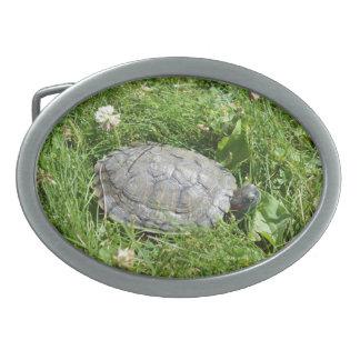 Baby Red Eared Slider Turtle Oval Belt Buckle