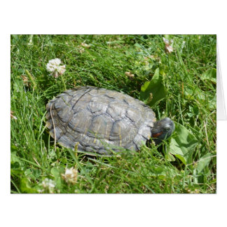 Baby Red Eared Slider Turtle Big Greeting Card