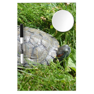 Baby Red Eared Slider Turtle Dry Erase Whiteboard