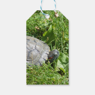 Baby Red Eared Slider Turtle Pack Of Gift Tags