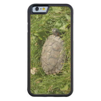 Baby Red Eared Slider Turtle Maple iPhone 6 Bumper Case