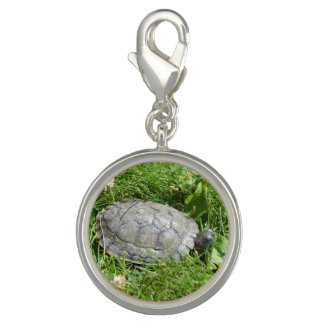 Baby Red Eared Slider Turtle Photo Charm