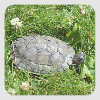 Baby Red Eared Slider Turtle Square Sticker