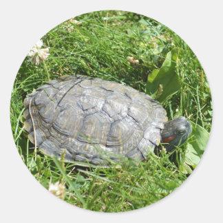 Baby Red Eared Slider Turtle Round Sticker