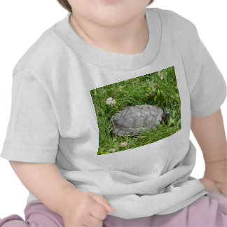 Baby Red Eared Slider Turtle Tees