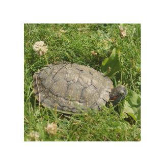 Baby Red Eared Slider Turtle Wood Prints