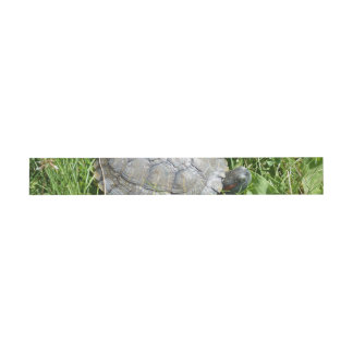 Baby Red Eared Slider Turtle Invitation Belly Band