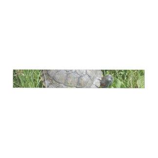 Baby Red Eared Slider Turtle Wraparound Address Label