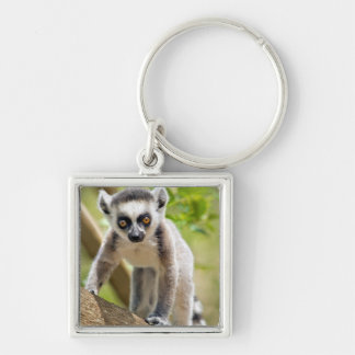 Baby ring-tailed lemur Silver-Colored square key ring