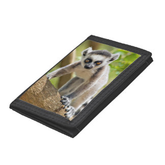 Baby ring-tailed lemur trifold wallet