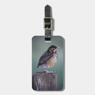 baby robin on fence post tags for luggage