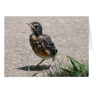 Baby Robin on the lookout Card
