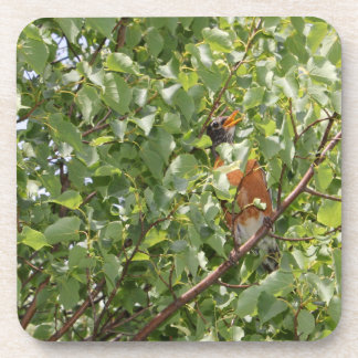 Baby Robin Sitting in the Grass Beverage Coasters