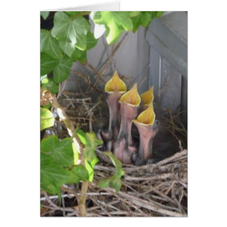 Baby Robins Greeting Card