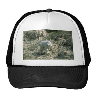 Baby Rocky Mountain Goat Mesh Hat