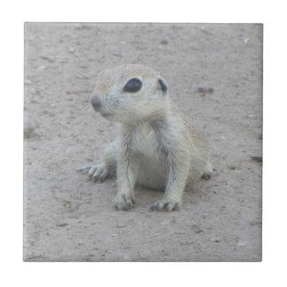 Baby Round-tail Ground Squirrel Ceramic Tile