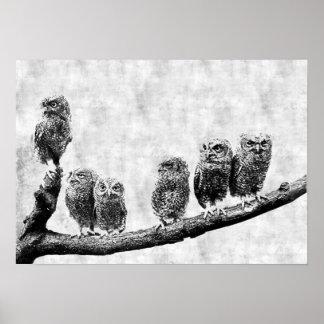 Baby Screech Owls Poster