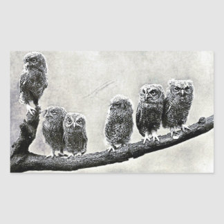Baby Screech Owls Sticker