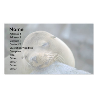 Baby sea lion, Galapagos Islands Business Card Template